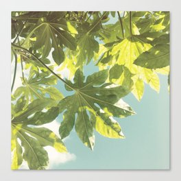 Fig Leaves Canvas Print