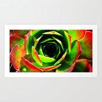 succulent Art Prints featuring Succulent by Derek Fleener