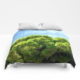 Reach High Comforters