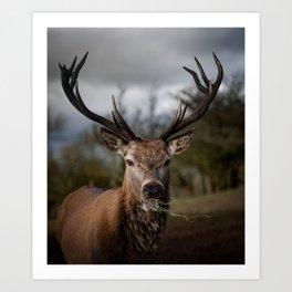 Deer Enjoying His Food Art Print