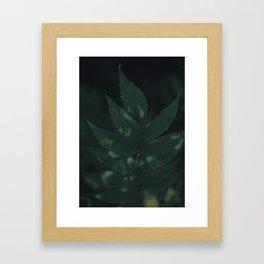 spirea Framed Art Print