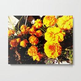 Orange Beauties Metal Print