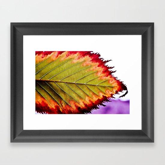 Fall Splendor Framed Art Print