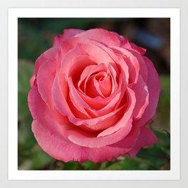 'Cherish' Rose Art Print