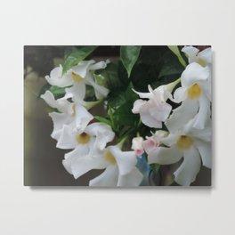 White flowering vine Metal Print