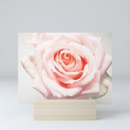 Blush Pink Rose Mini Art Print