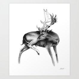 Fallow Deer Stag Art Print