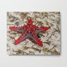 Ocean Red Starfish Illustration Metal Print