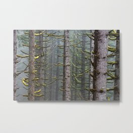 Pacfic Northwest Mountain Forest III - 108/365 Landscape Photography Metal Print