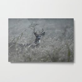 Foggy Morning Buck Metal Print