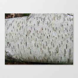 Birch Bark on a Fallen Tree Canvas Print