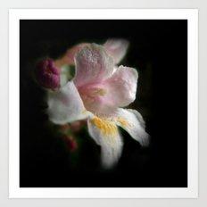 one apple blossom on black Art Print
