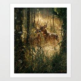 Whitetail Deer - A Golden Moment Art Print