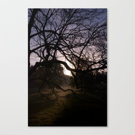 Lite From Behind Canvas Print