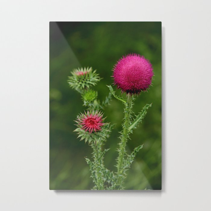 Prickly beauty Metal Print