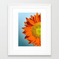 sunflowers Framed Art Prints featuring sunflowers by mark ashkenazi