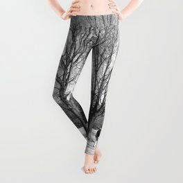 Photographer Photo Leggings