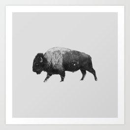 Buffalo, Bison Art Print