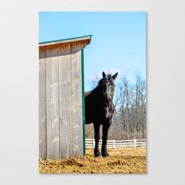 Percheron Horse by Teresa Thompson Canvas Print