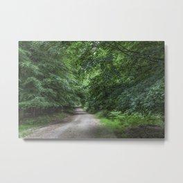 Shady Beech Path 1 Metal Print