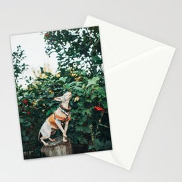Autumn sphinx Stationery Cards