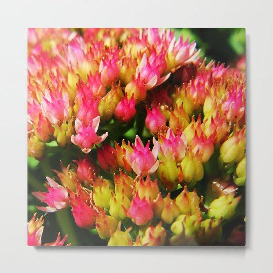 small pink flowers Metal Print