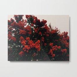Beautiful Red Flowers Metal Print