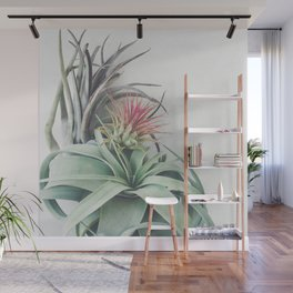 Air Plant Collection II Wall Mural