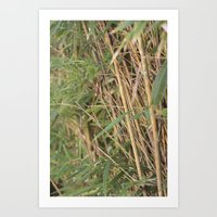 Tranquility Within The Bamboo Art Print