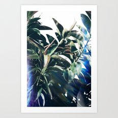 Verve Art Print
