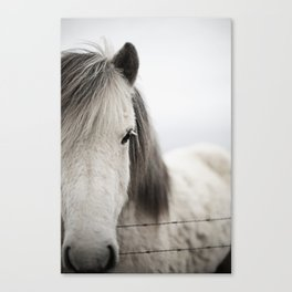 Icelandic White Canvas Print
