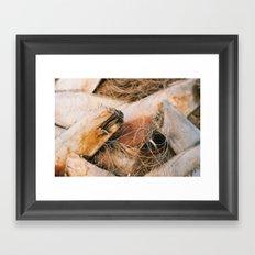 Palm Tree Trunk Framed Art Print
