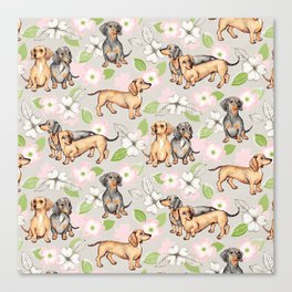 Dachshunds and dogwood blossoms Canvas Print