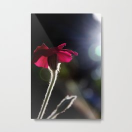 Flower with Sun Outline Metal Print