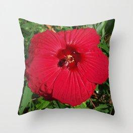 Hibiscus 'Fireball' - regal red star of my late summer garden Throw Pillow