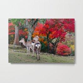 Nara Deer Park Metal Print
