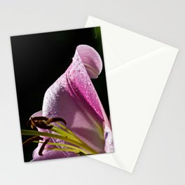 After The Rain Lily Stationery Cards