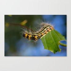 Yellownecked Caterpillar  Canvas Print