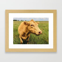 Blonde Cow Framed Art Print