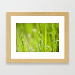 Summer Green Framed Art Print