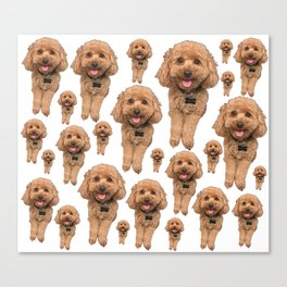 so many ollies! Canvas Print
