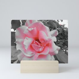 semi pink rose Mini Art Print