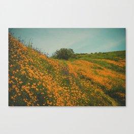 California Poppies 015 Canvas Print