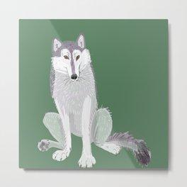 Canadian Wolf (Canis lupus occidentalis) (c) 2017 Metal Print