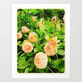 Peaches and Cream Dahlias Art Print
