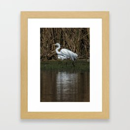 Great and Snowy Egrets, No. 3 Framed Art Print