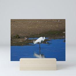 Snowy Egret at Ding Mini Art Print