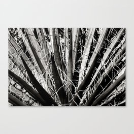 Joshua Tree 07 Canvas Print