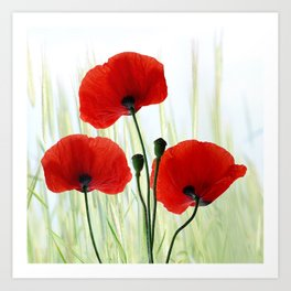 Poppies red 008 Art Print