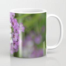 alyssum flower bloom Coffee Mug